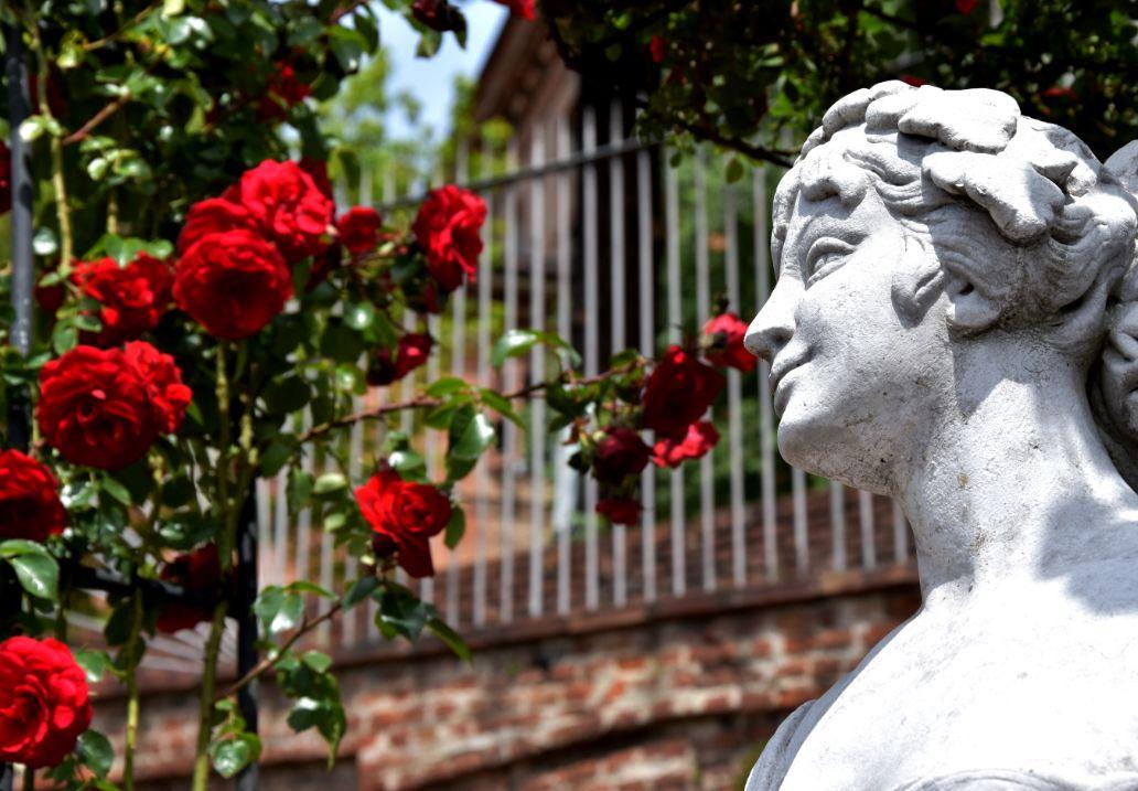 foto roseto del giardino delle rose